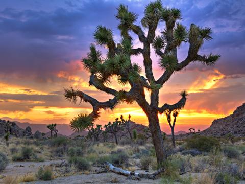 Spirituelles Wissen Der Baum Des Lebens
